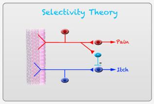 Selectivity Theory