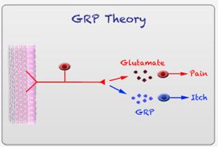 GRPTheory